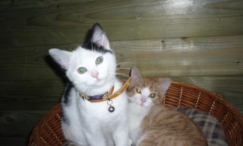 kattenpension brugge kathotel Kwaputhoeve opvang